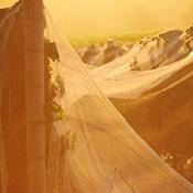 Moss Wood Winery Nets
