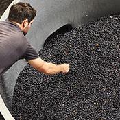 red grapes open fermenter